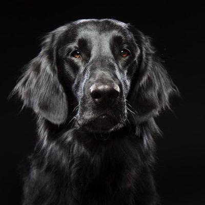 Huisdieren-Je beste vriend